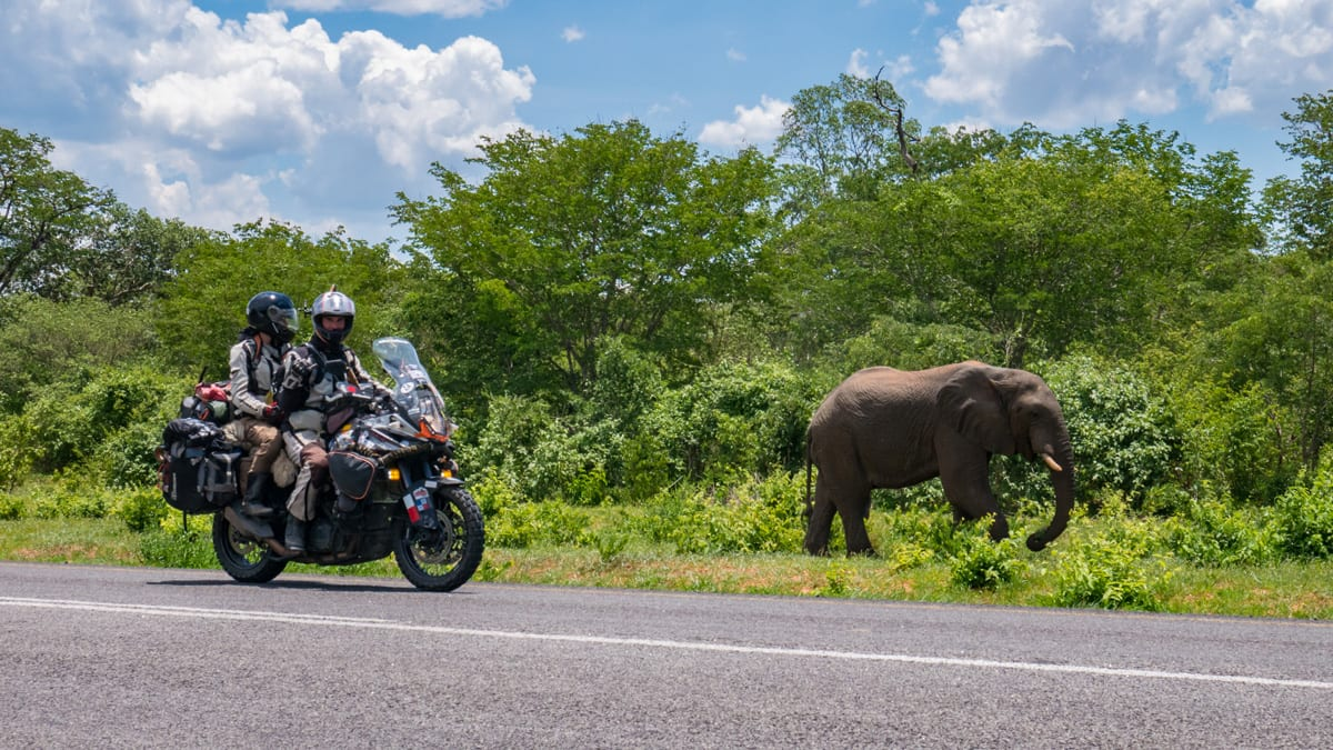 Tim and Marisa Notier ride amongst elephants